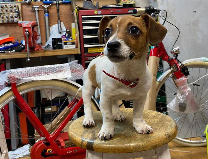 Life on Wheels has a new shop dog!